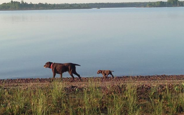 Timber and Bailey, June 2014